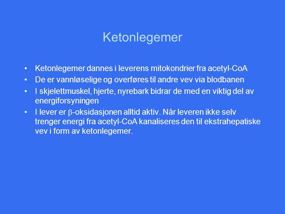 Ketonlegemer Ketonlegemer dannes i leverens mitokondrier fra acetyl-CoA. De er vannløselige og overføres til andre vev via blodbanen.