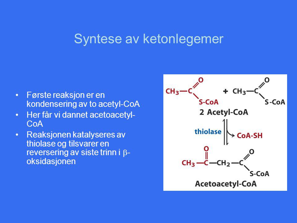 Syntese av ketonlegemer