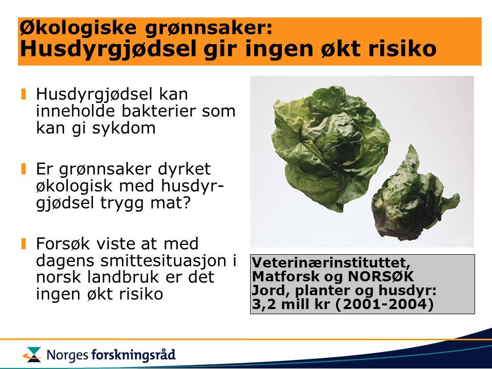Økologiske grønnsaker: Husdyrgjødsel gir ingen økt risiko