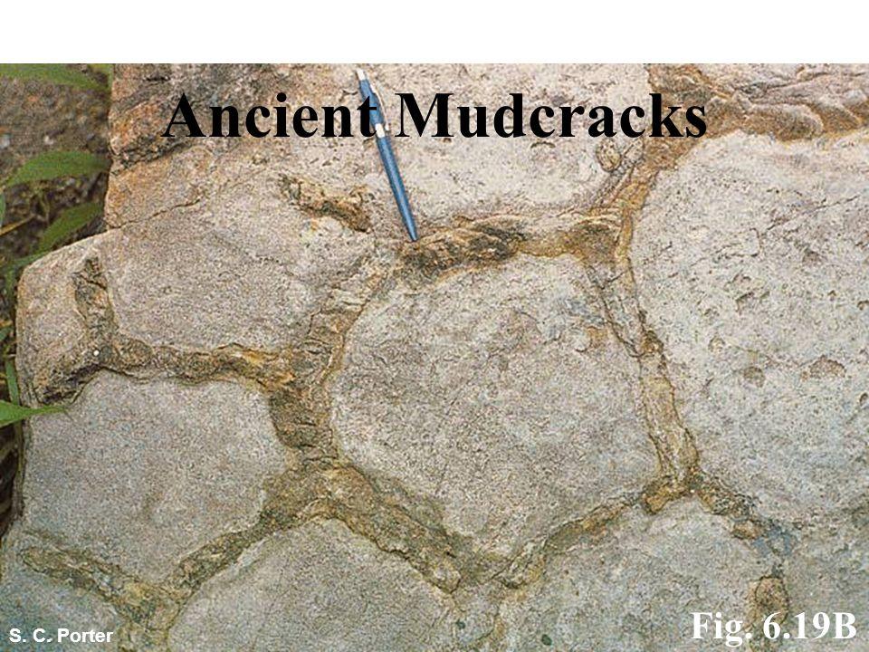 Ancient Mudcracks Fig. 6.19B S. C. Porter