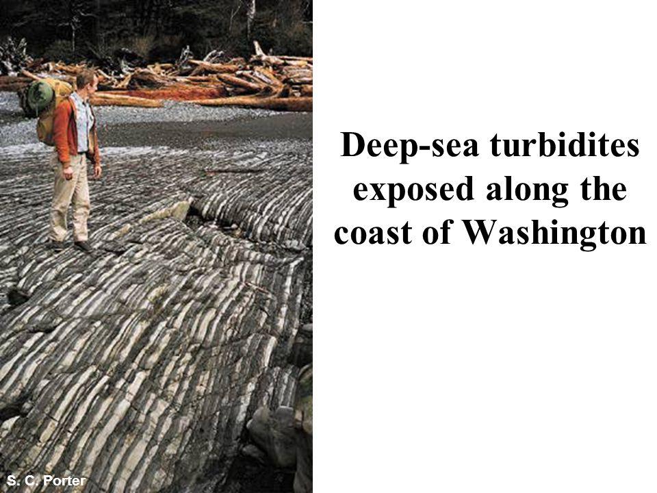 Deep-sea turbidites exposed along the coast of Washington