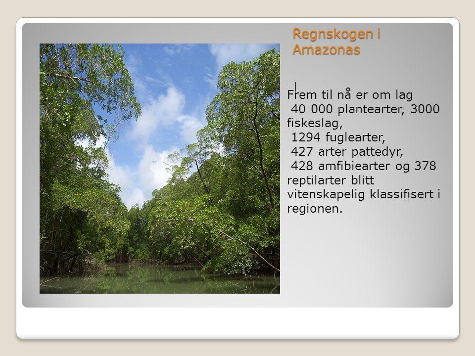 Regnskogen i Amazonas Frem til nå er om lag