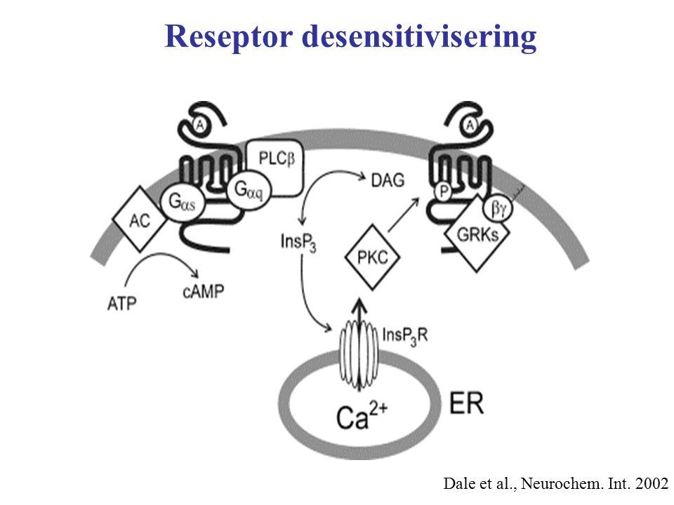 Reseptor desensitivisering
