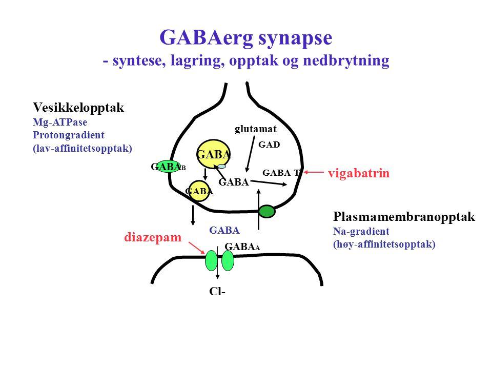 GABAerg synapse - syntese, lagring, opptak og nedbrytning