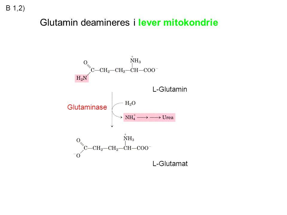 Glutamin deamineres i lever mitokondrie