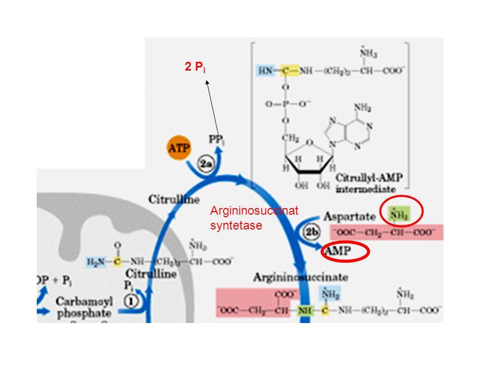 2 Pi Argininosuccinat syntetase Citrullin til argininosuccinat
