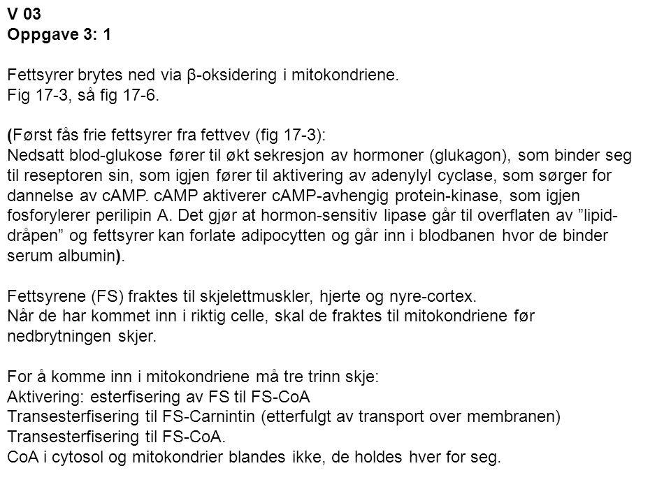 V 03 Oppgave 3: 1. Fettsyrer brytes ned via β-oksidering i mitokondriene. Fig 17-3, så fig 17-6. (Først fås frie fettsyrer fra fettvev (fig 17-3):