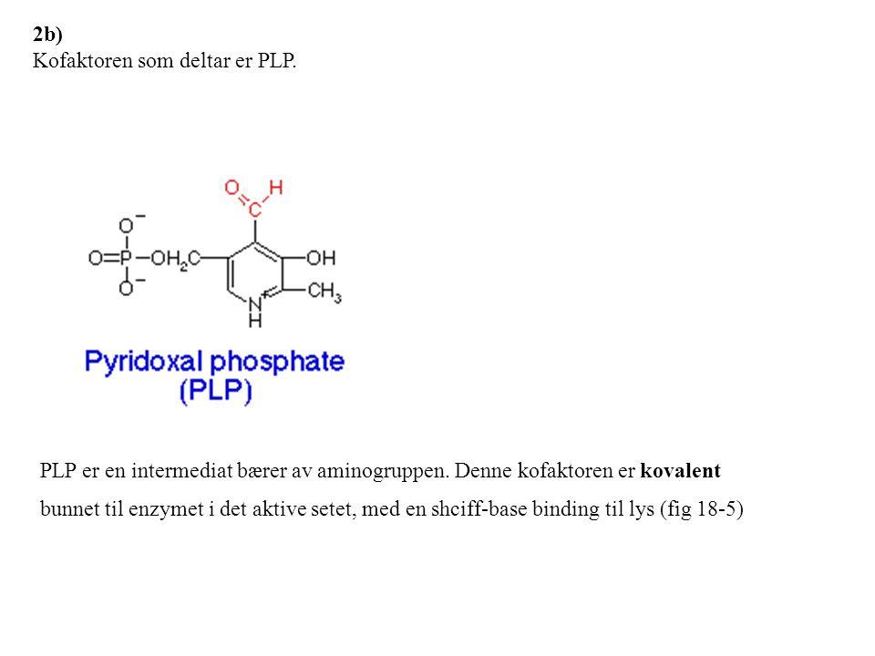 2b) Kofaktoren som deltar er PLP.