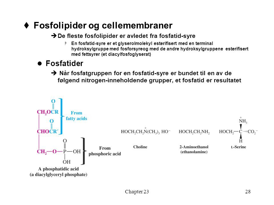 Fosfolipider og cellemembraner