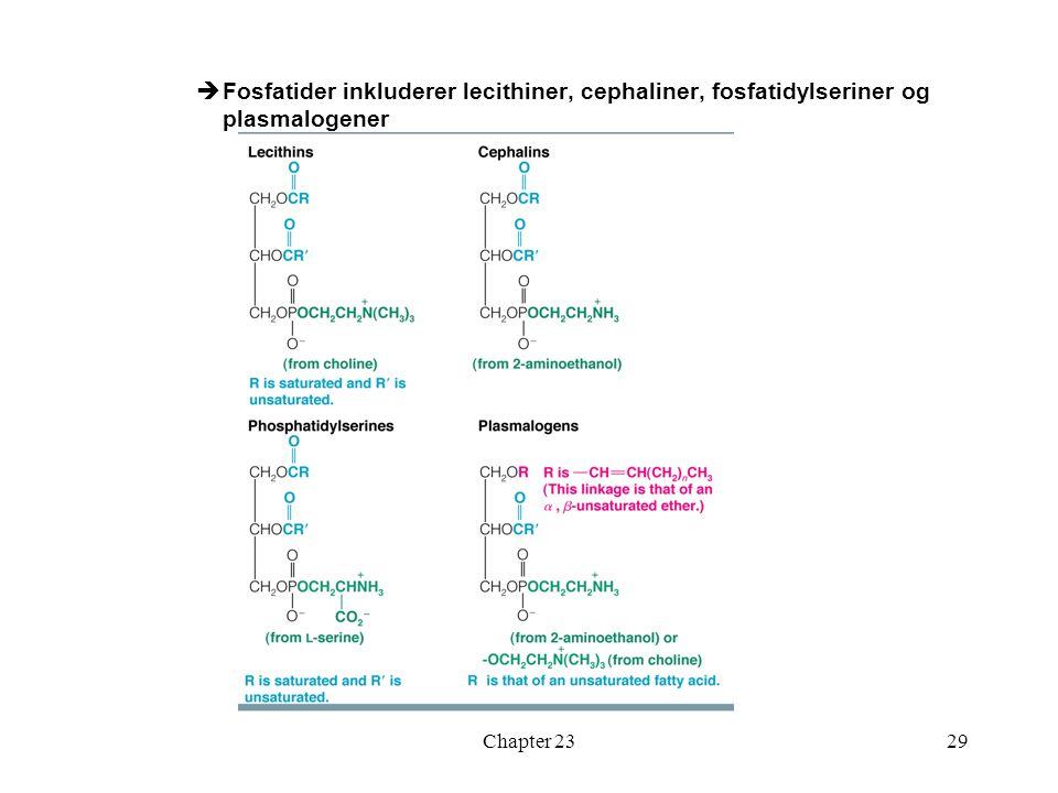 Fosfatider inkluderer lecithiner, cephaliner, fosfatidylseriner og plasmalogener