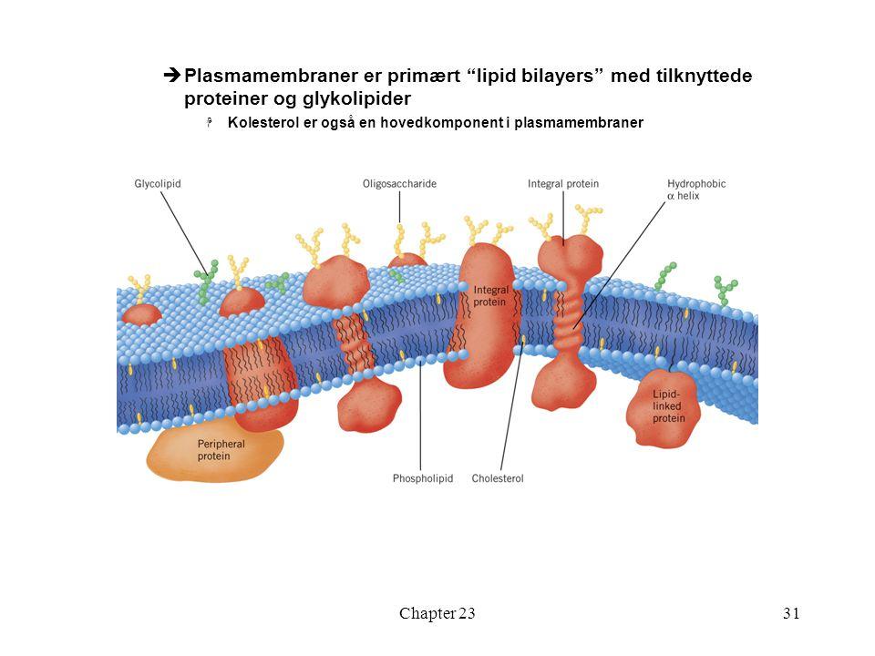 Plasmamembraner er primært lipid bilayers med tilknyttede proteiner og glykolipider