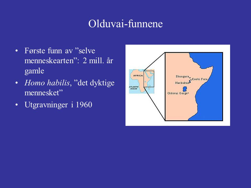 Olduvai-funnene Første funn av selve menneskearten : 2 mill. år gamle