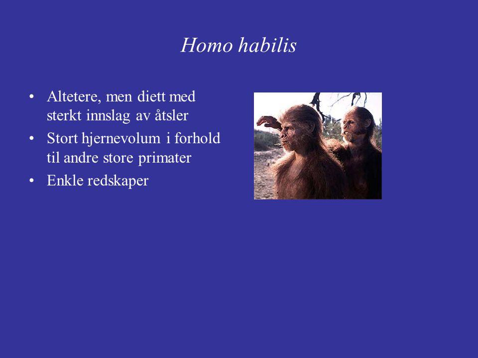 Homo habilis Altetere, men diett med sterkt innslag av åtsler