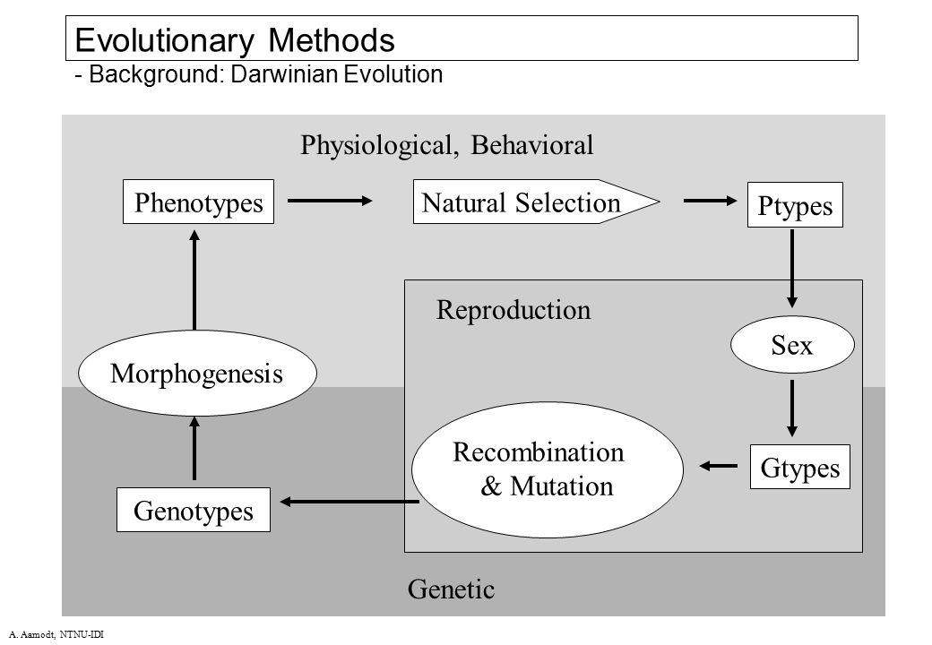 Evolutionary Methods - Background: Darwinian Evolution