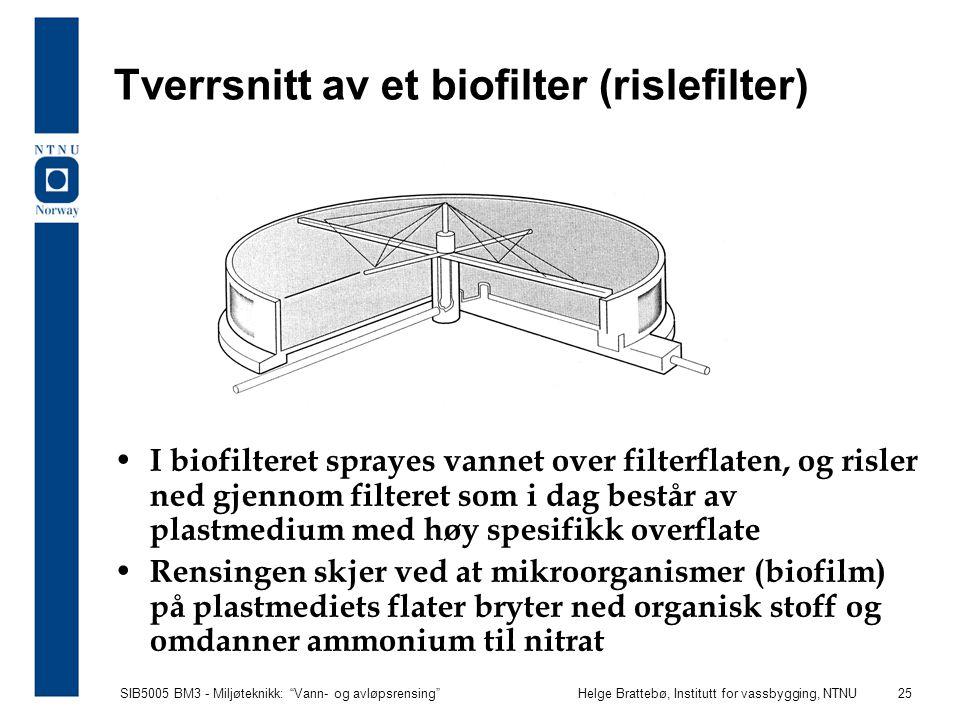 Tverrsnitt av et biofilter (rislefilter)