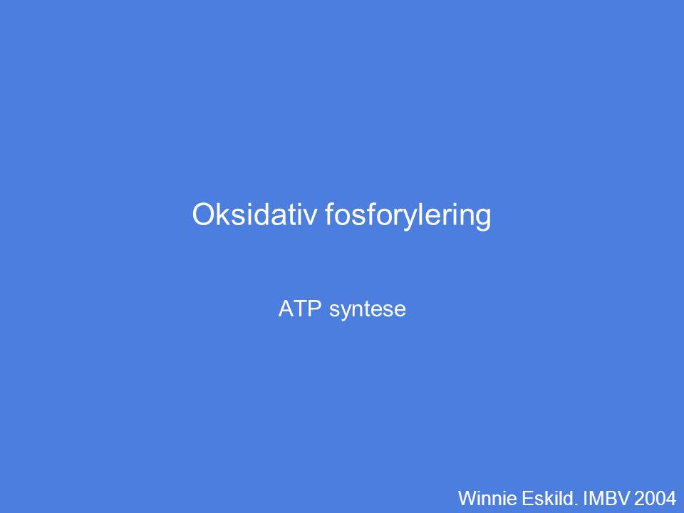 Oksidativ fosforylering