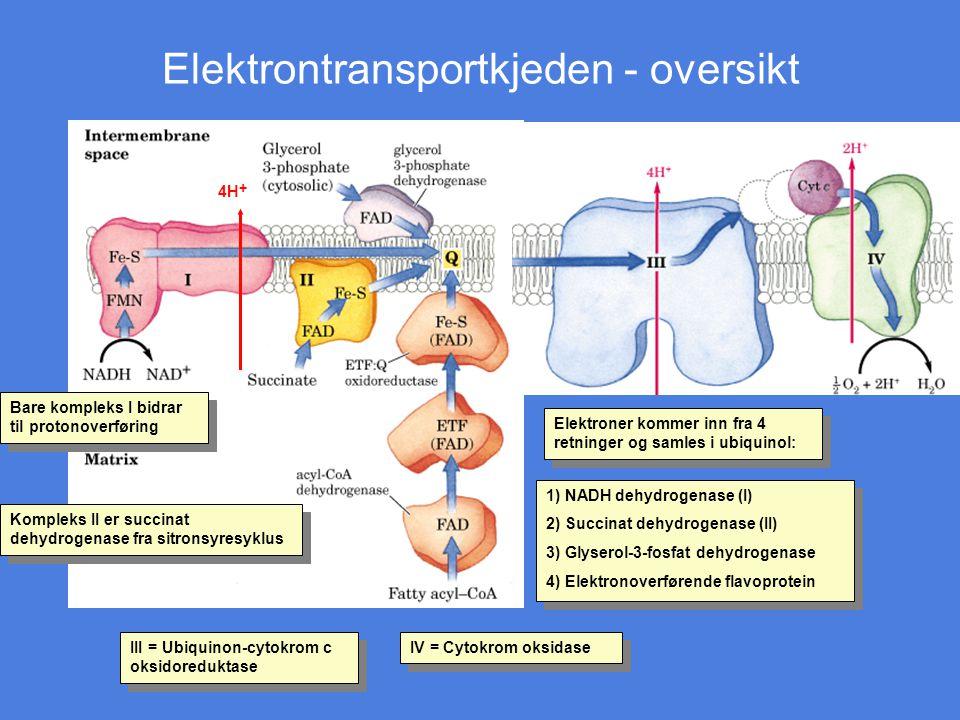Elektrontransportkjeden - oversikt