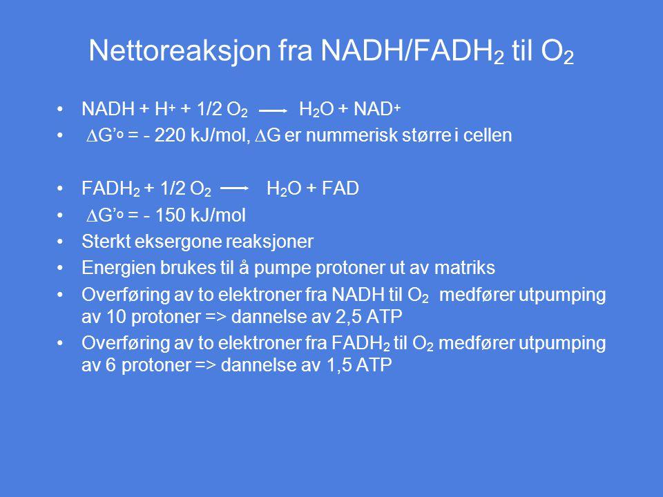Nettoreaksjon fra NADH/FADH2 til O2