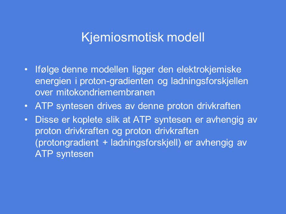 Kjemiosmotisk modell Ifølge denne modellen ligger den elektrokjemiske energien i proton-gradienten og ladningsforskjellen over mitokondriemembranen.