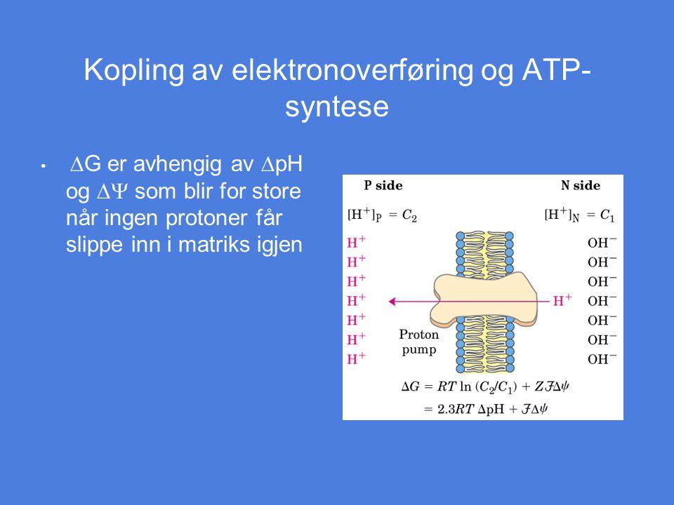 Kopling av elektronoverføring og ATP-syntese