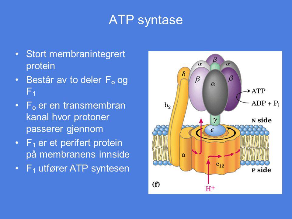 ATP syntase Stort membranintegrert protein Består av to deler Fo og F1