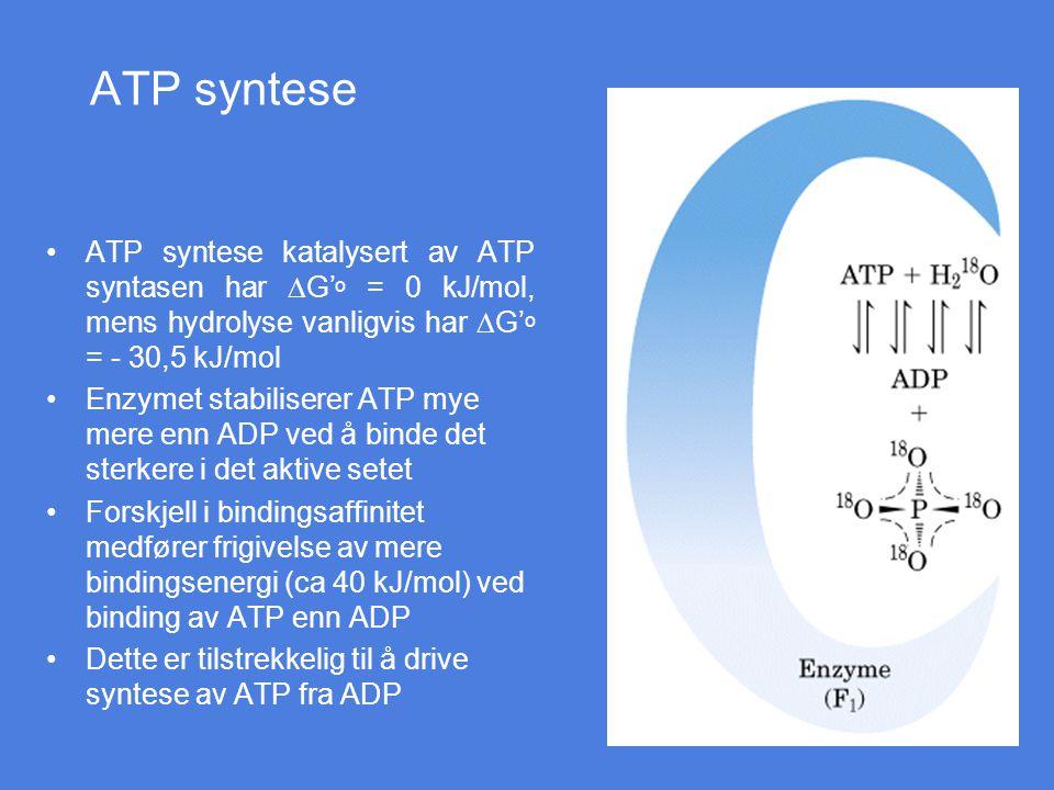 ATP syntese ATP syntese katalysert av ATP syntasen har DG'o = 0 kJ/mol, mens hydrolyse vanligvis har DG'o = - 30,5 kJ/mol.
