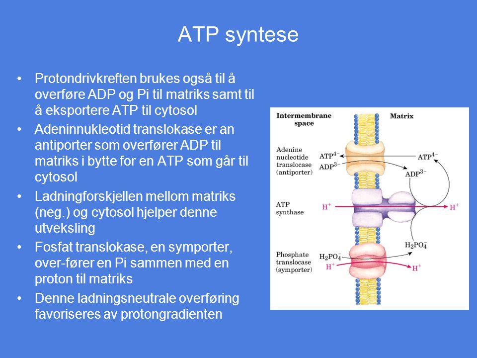 ATP syntese Protondrivkreften brukes også til å overføre ADP og Pi til matriks samt til å eksportere ATP til cytosol.