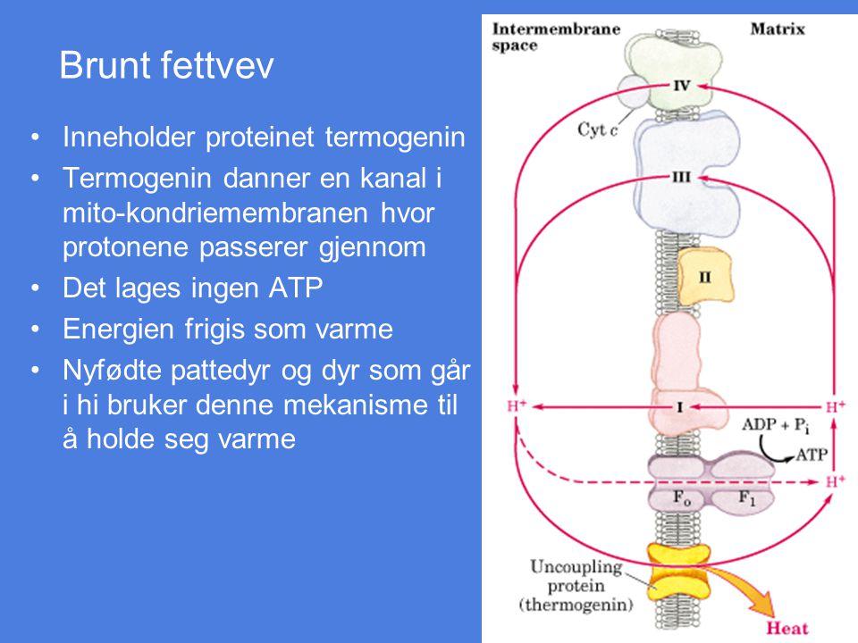 Brunt fettvev Inneholder proteinet termogenin