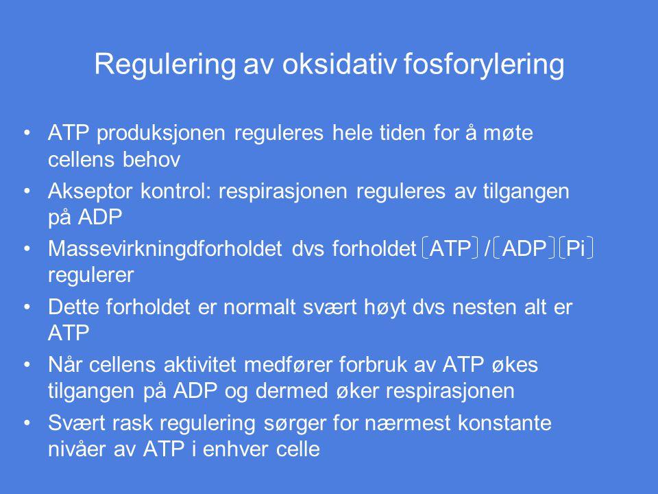 Regulering av oksidativ fosforylering