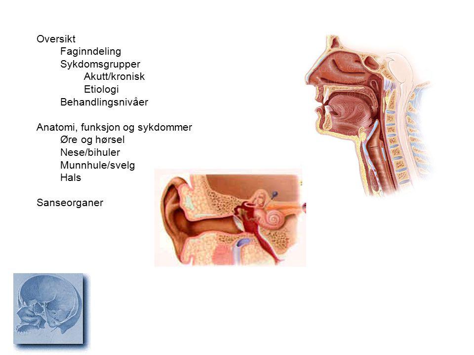 Oversikt Faginndeling. Sykdomsgrupper. Akutt/kronisk. Etiologi. Behandlingsnivåer. Anatomi, funksjon og sykdommer.