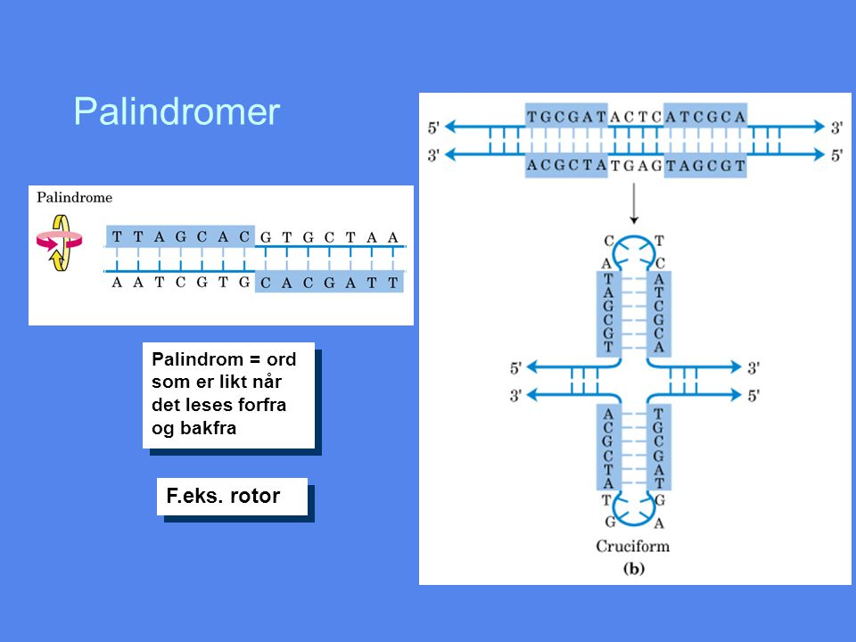 Palindromer F.eks. rotor