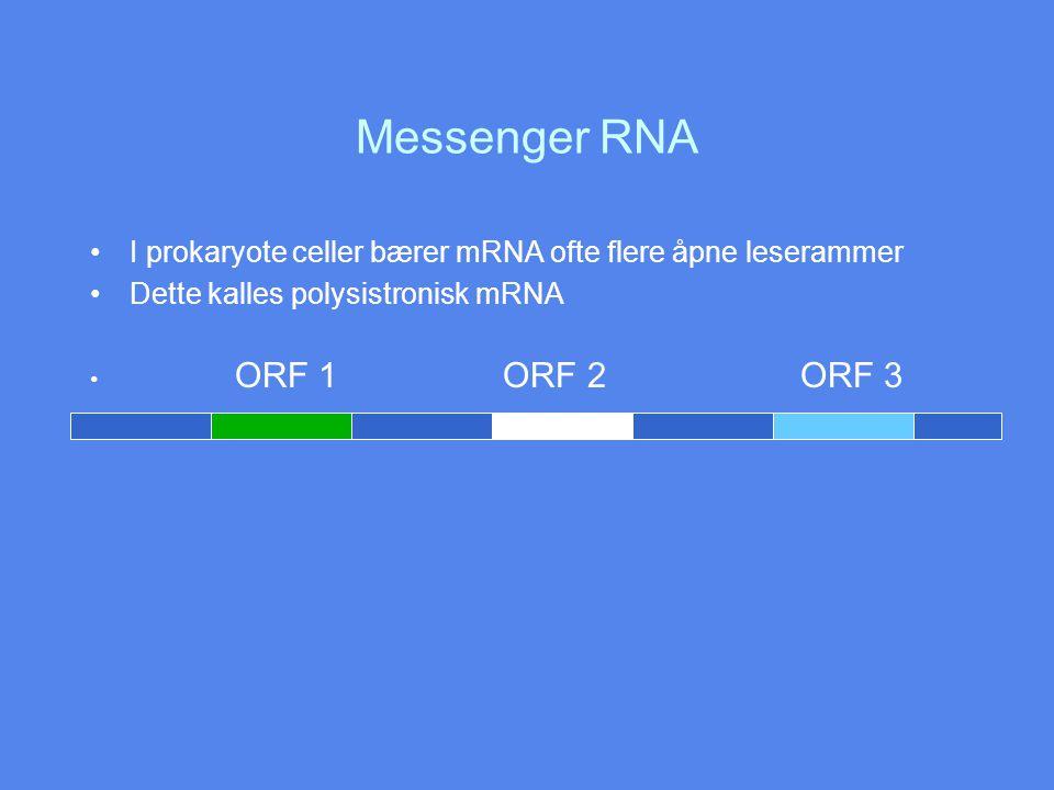 Messenger RNA I prokaryote celler bærer mRNA ofte flere åpne leserammer. Dette kalles polysistronisk mRNA.