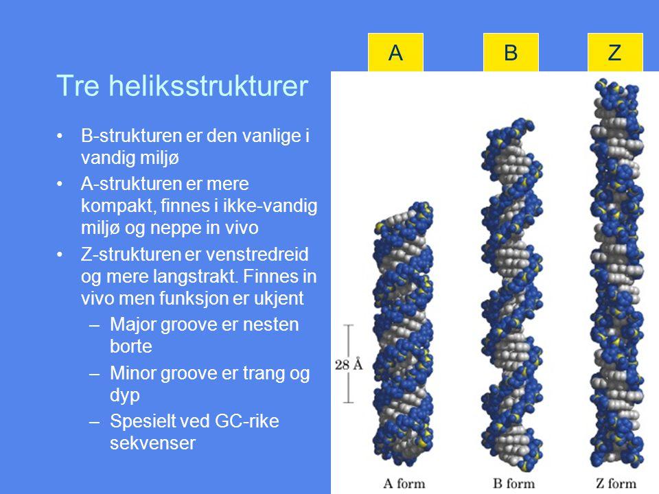 Tre heliksstrukturer A B Z B-strukturen er den vanlige i vandig miljø