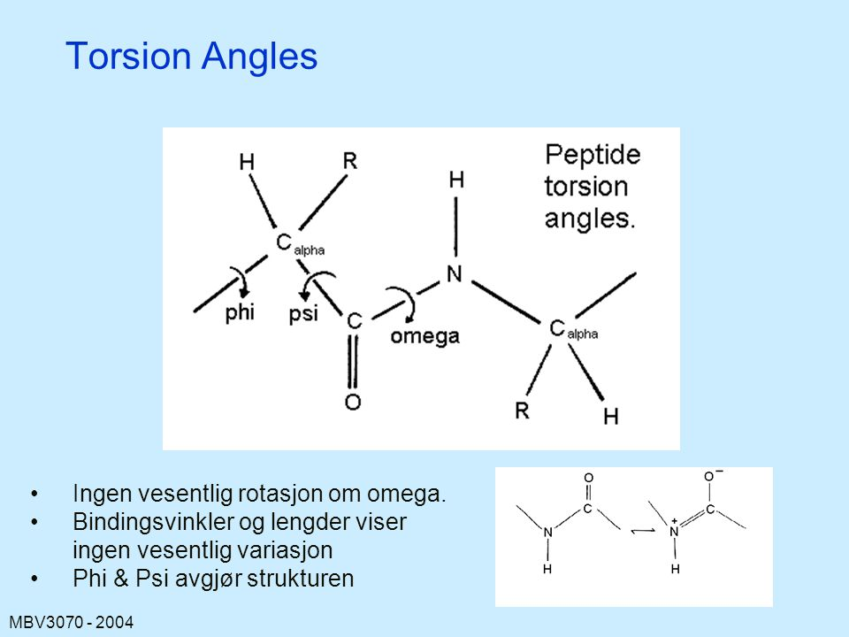 Torsion Angles Ingen vesentlig rotasjon om omega.