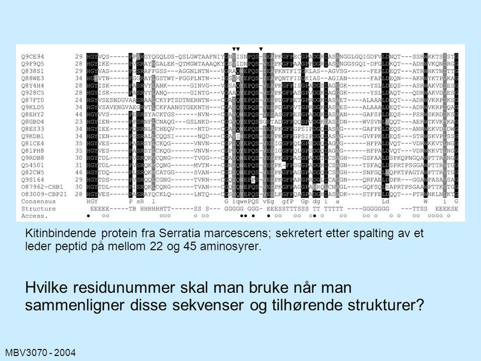 Kitinbindende protein fra Serratia marcescens; sekretert etter spalting av et leder peptid på mellom 22 og 45 aminosyrer.