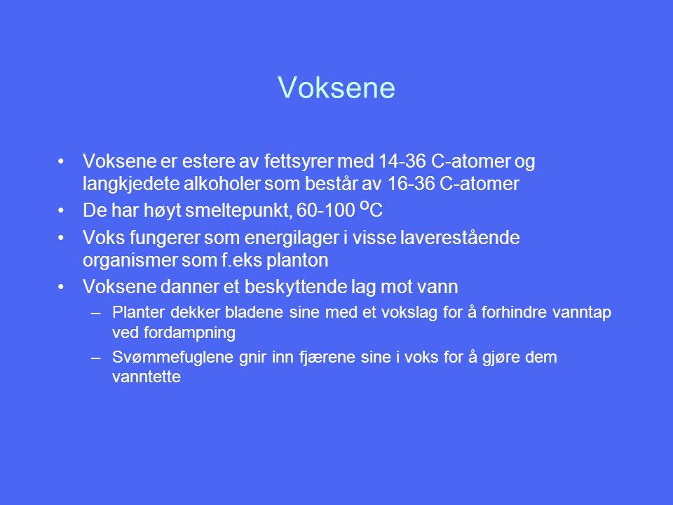 Voksene Voksene er estere av fettsyrer med 14-36 C-atomer og langkjedete alkoholer som består av 16-36 C-atomer.
