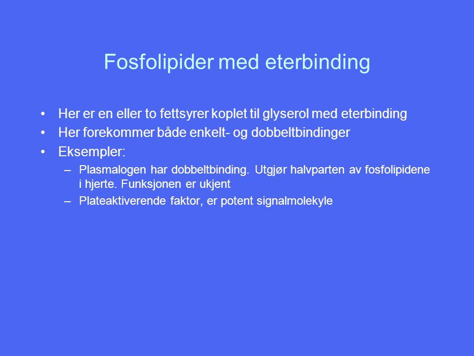 Fosfolipider med eterbinding