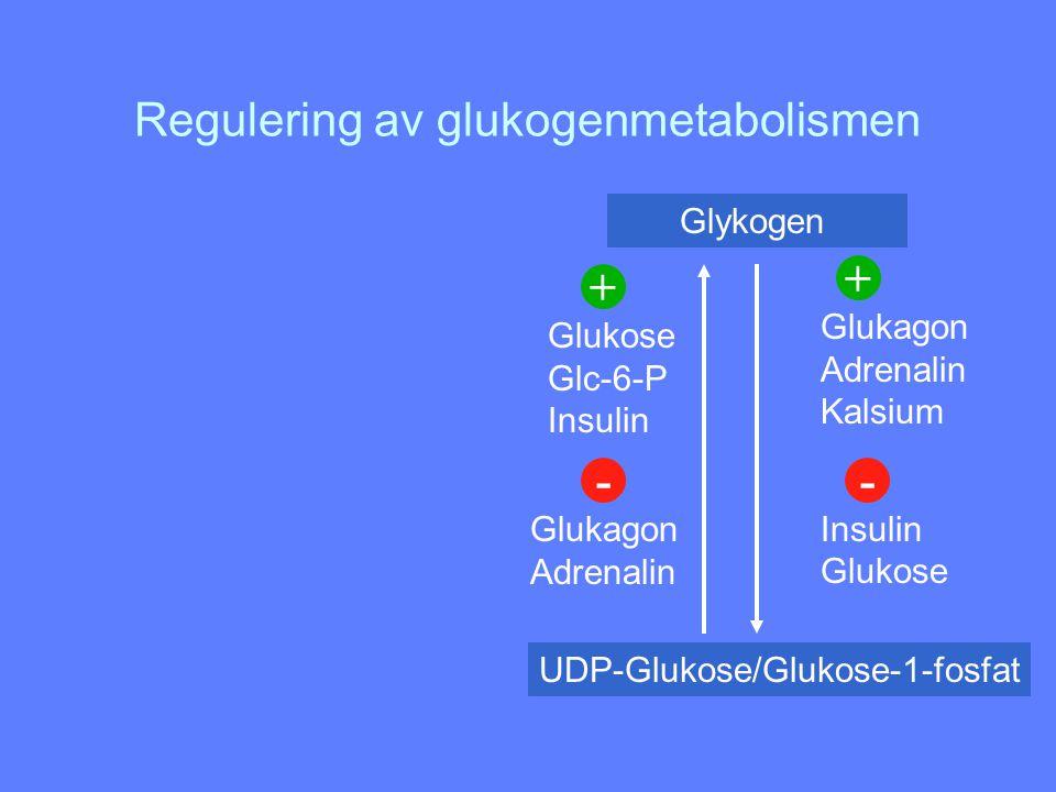 Regulering av glukogenmetabolismen