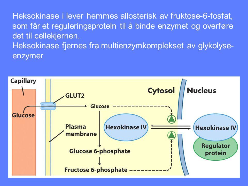 Heksokinase i lever hemmes allosterisk av fruktose-6-fosfat,