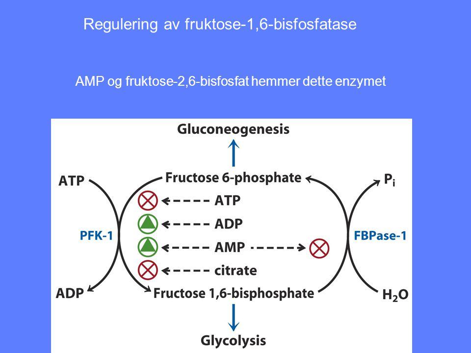 Regulering av fruktose-1,6-bisfosfatase