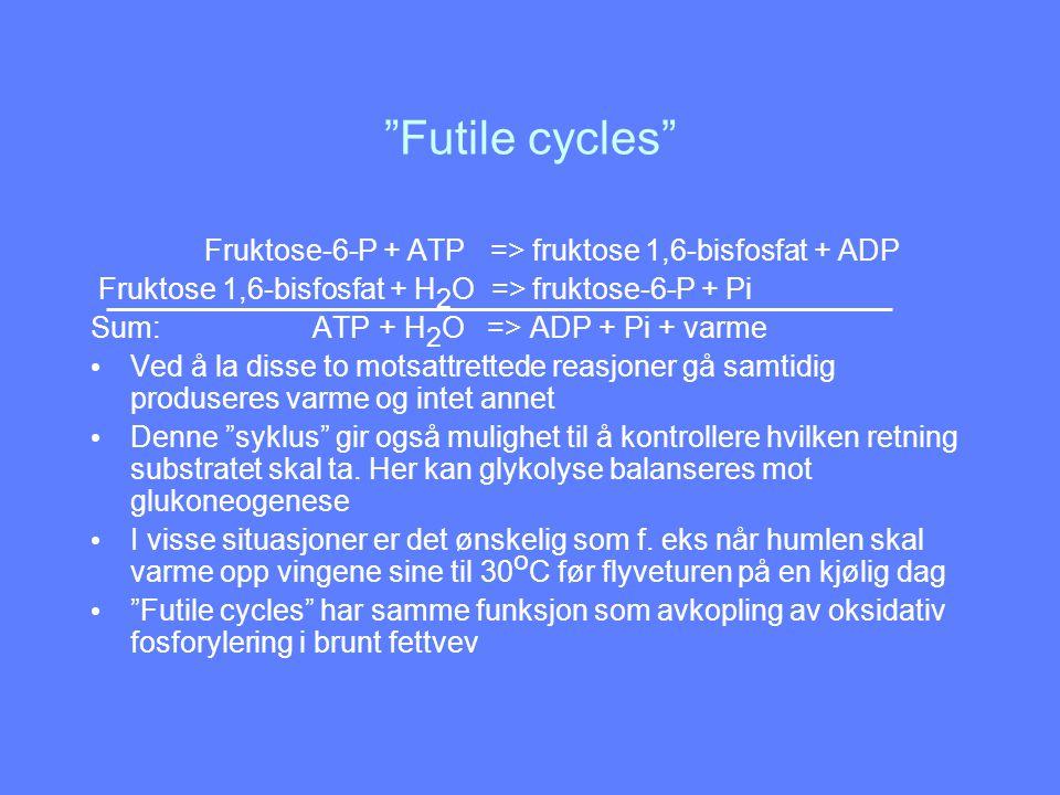 Futile cycles Fruktose-6-P + ATP => fruktose 1,6-bisfosfat + ADP