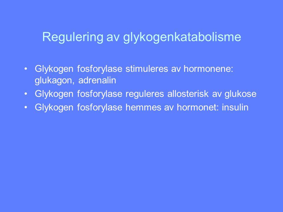 Regulering av glykogenkatabolisme