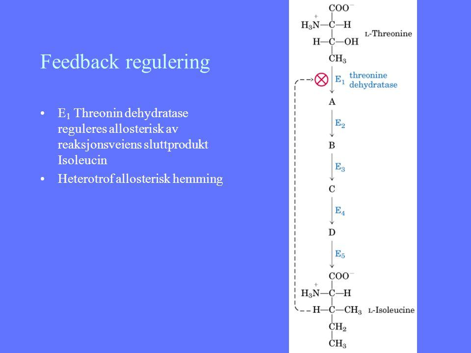 Feedback regulering E1 Threonin dehydratase reguleres allosterisk av reaksjonsveiens sluttprodukt Isoleucin.