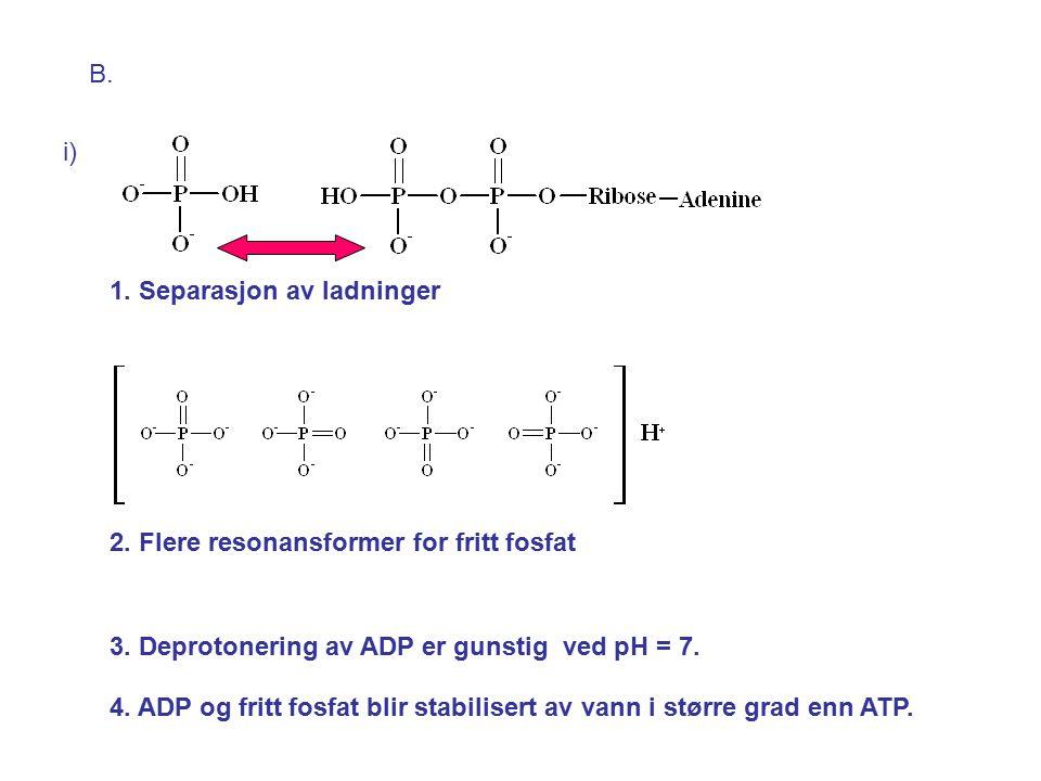 B. i) 1. Separasjon av ladninger. 2. Flere resonansformer for fritt fosfat. 3. Deprotonering av ADP er gunstig ved pH = 7.