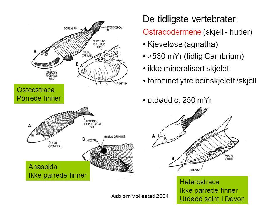 De tidligste vertebrater: