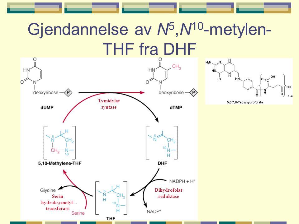 Gjendannelse av N5,N10-metylen-THF fra DHF
