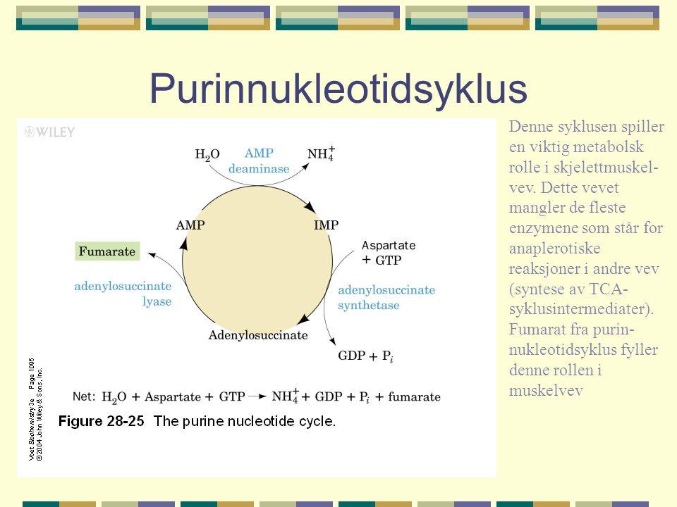 Purinnukleotidsyklus