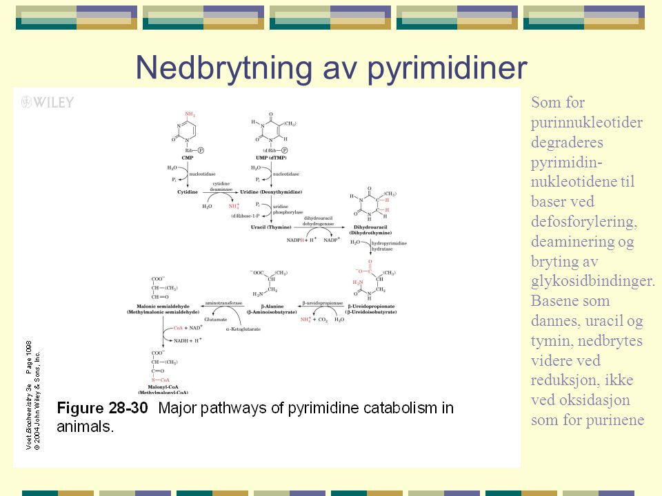 Nedbrytning av pyrimidiner