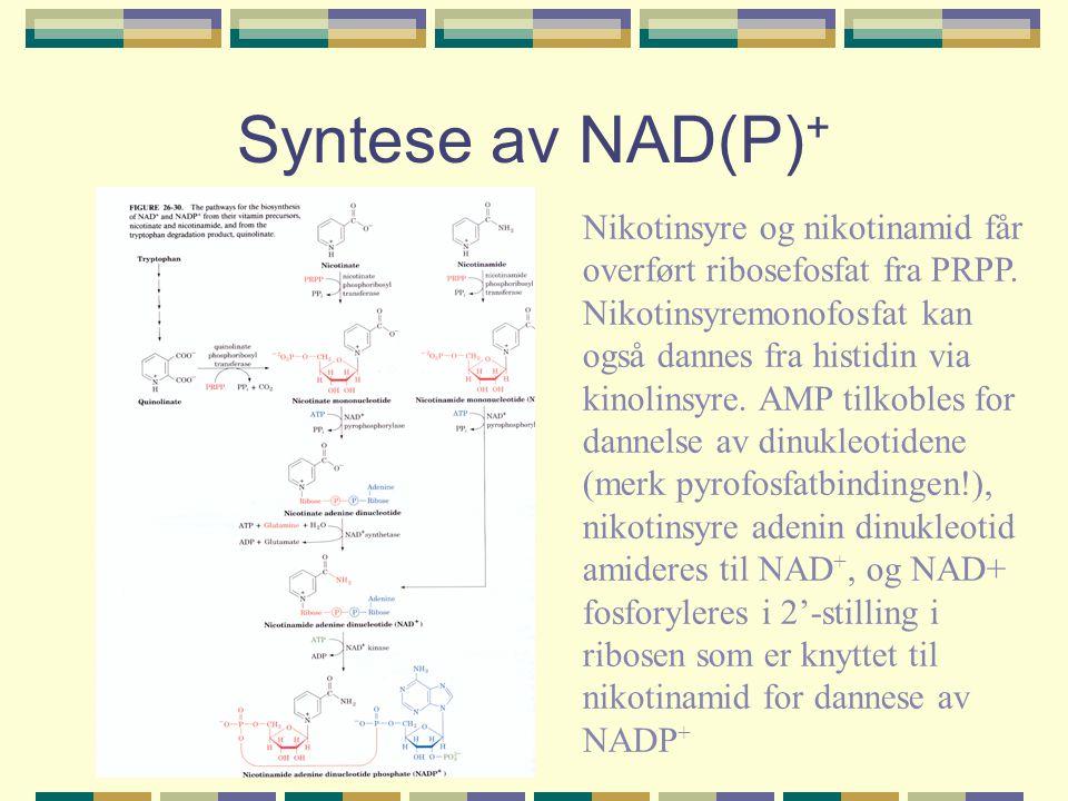 Syntese av NAD(P)+