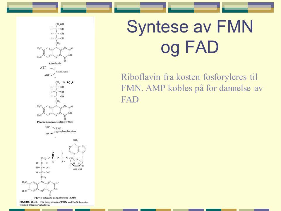 Syntese av FMN og FAD ATP. Riboflavin fra kosten fosforyleres til FMN.